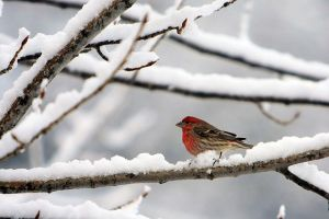 640px-Bird_in_Snow