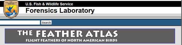 US FWS feather atlas