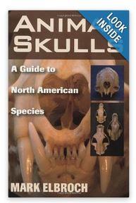 skull book 1